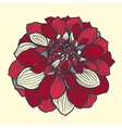 Hand-drawn flower of dahlia vector image vector image