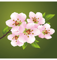 Blossoming sakura japanese cherry tree vector image vector image