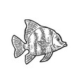 fish black engraving vintage vector image