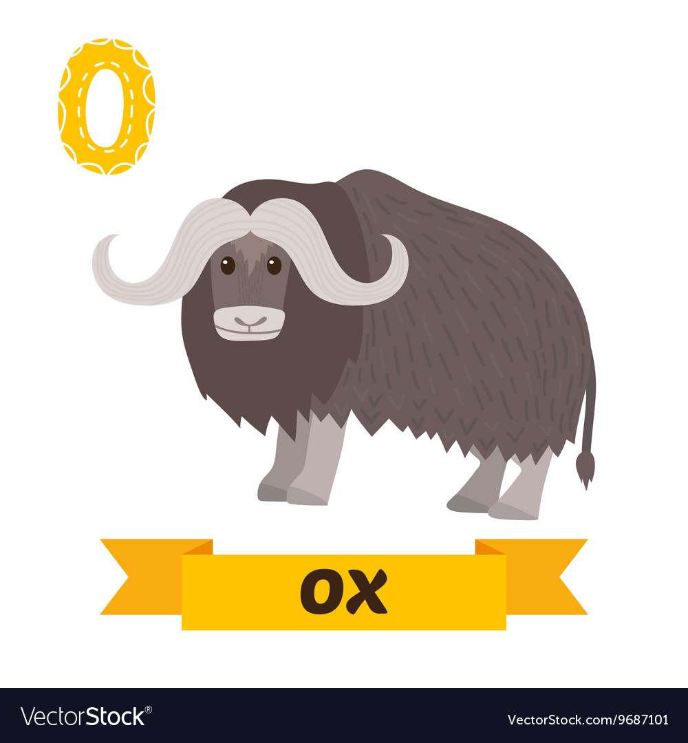Ox o letter cute children animal alphabet in vector