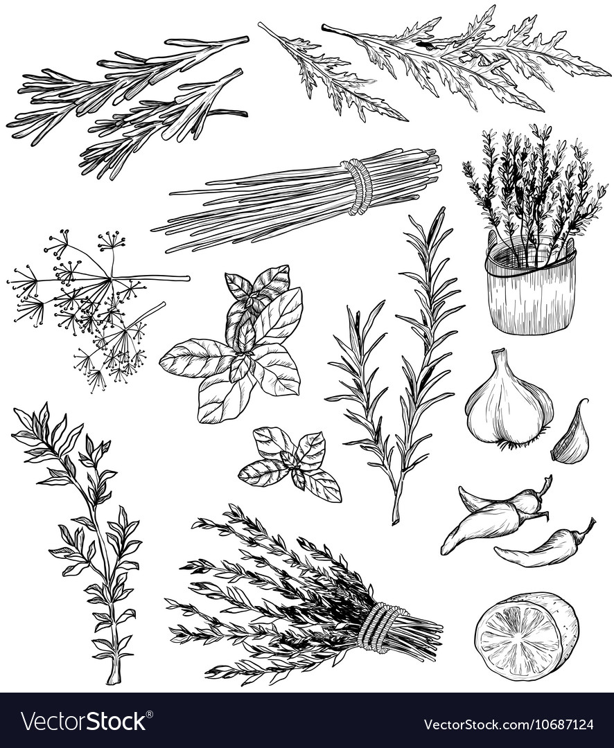 Herb and spices set vector