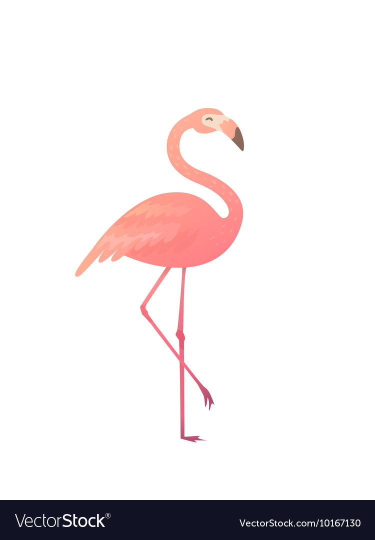 A pink flamingo vector