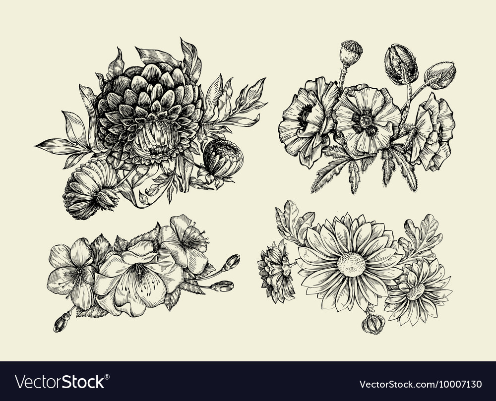 Flowers hand drawn sketch flower poppy vector