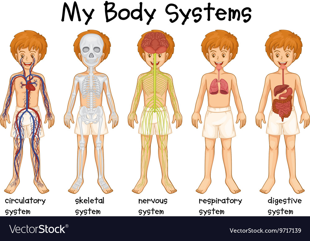 Different system in human vector