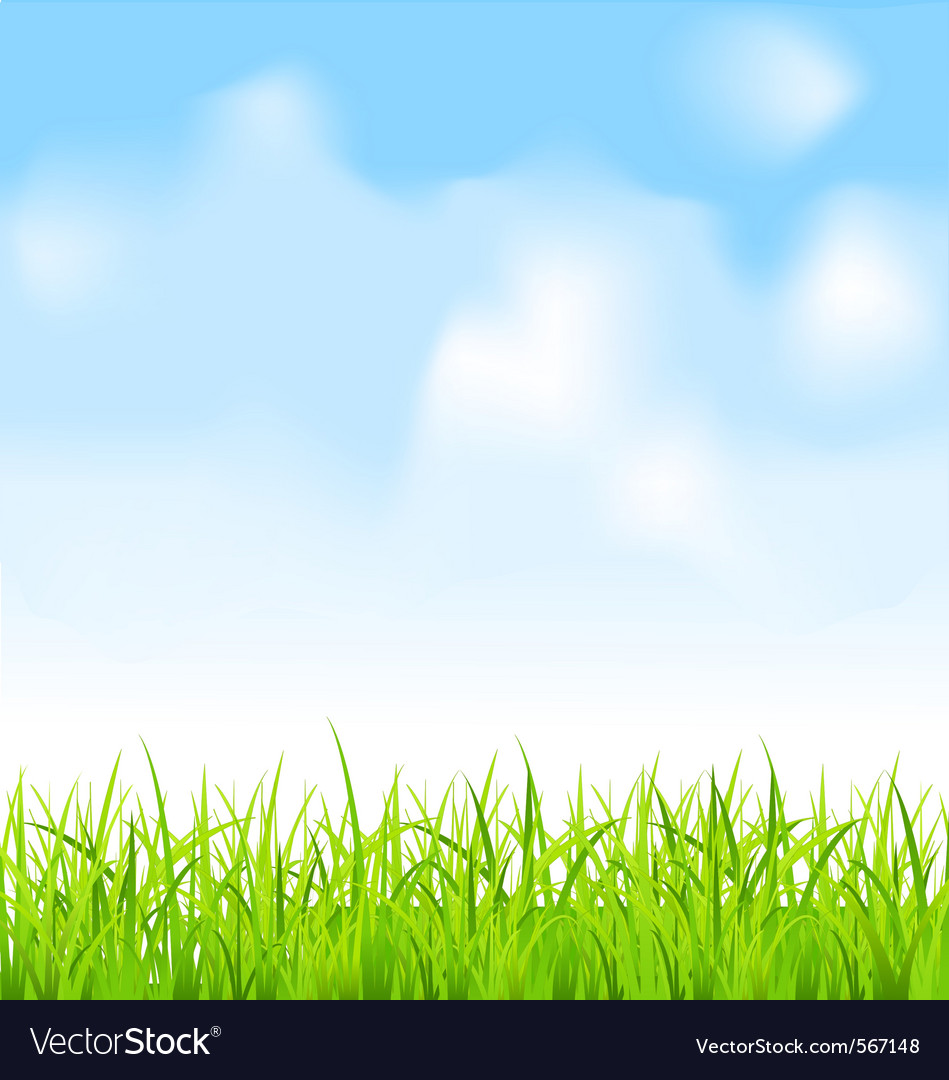 Green grass and blue sky vector