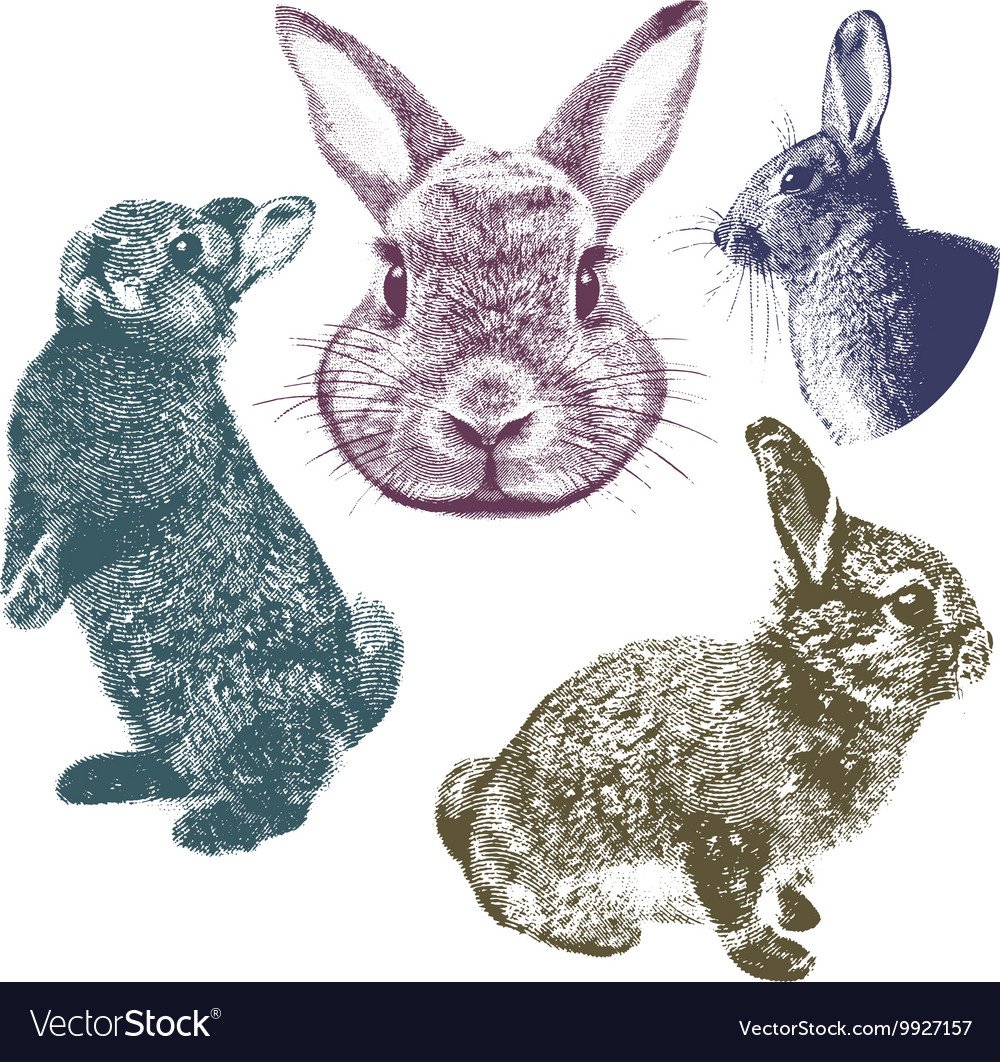 Vintage bunnies set vector