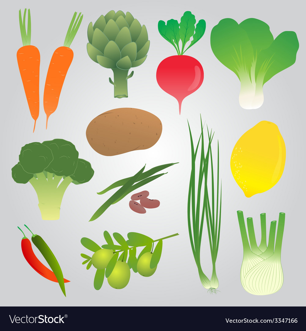Organic vegetables collection vector