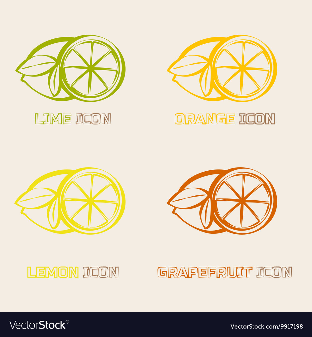 Citrus ifruits cons vector