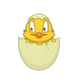 Chicken in egg Cheerful cute character vector image