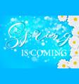 white daisy chamomile flowers on blue sunny summer vector image