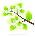 Tree branch icon vector image