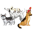 Sick dogs and cats vector image vector image
