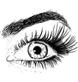 Eyes of the young girl vector image