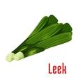 Leek vegetable plant icon vector image
