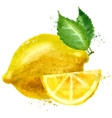 lemon logo design template fruit or food vector image