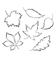 Stylized leaves vector image