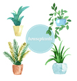 Watercolor set of house plants vector image