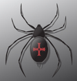 Black spider with red cross on back vector image