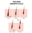 hair structure vector image