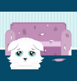 the cat spoiled the sofa sad cat flat vector image