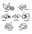 Set of hand drawn nuts vector image vector image