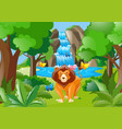 wild lion living in the forest vector image