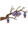 Happy cartoon bat hanging on tree vector image
