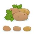 Potato Vegetable Edible Fruit vector image