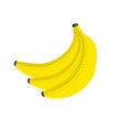 bunch of fresh yellow bananas with dotted line vector image