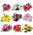 Set of multicolored petunias vector image