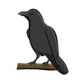 hand drawn bird raven vector image