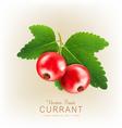 currant2 vs vector image