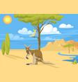 Australia wild background landscape animals vector image