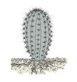 Cactus in soil vector image