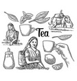 female tea pickers harvesting leaves rider on vector image