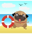 Dog pug at the beach vector image