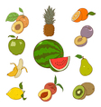 Collection of colorful fruins vector image