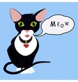 isolated black cartoon green eyes cat with Speech vector image