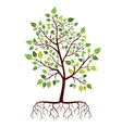 Tree with roots and green leaves vector image