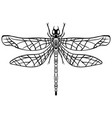 hand drawn sketch dragonfly tattoo vector image