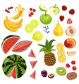 different fruits and berries vector image