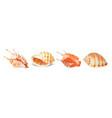set of seashells vector image