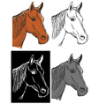 bay horse vector image
