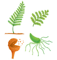 fern life cycle vector image