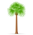 palm tree 19 vector image vector image