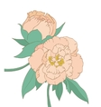 Peony isolated on white background vector image