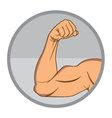 Muscular Biceps EPS10 vector image