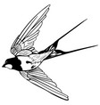 silhouette flying swallows vector image