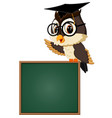 owl teacher at blackboard vector image