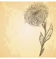 Sketch of chrysanthemum flower on grungy texture vector image vector image